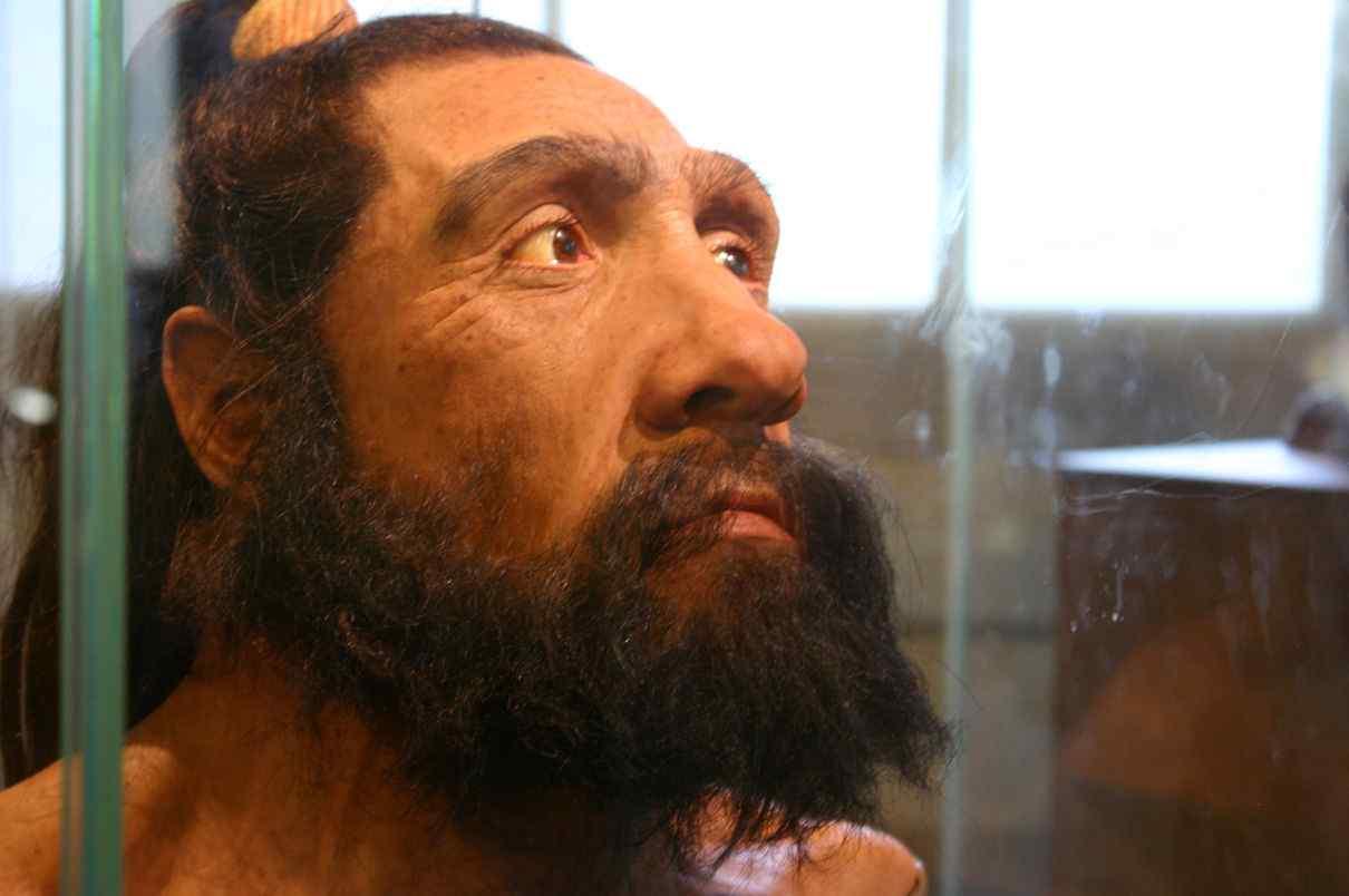 El hombre de Neandertal, Homo neanderthalensis