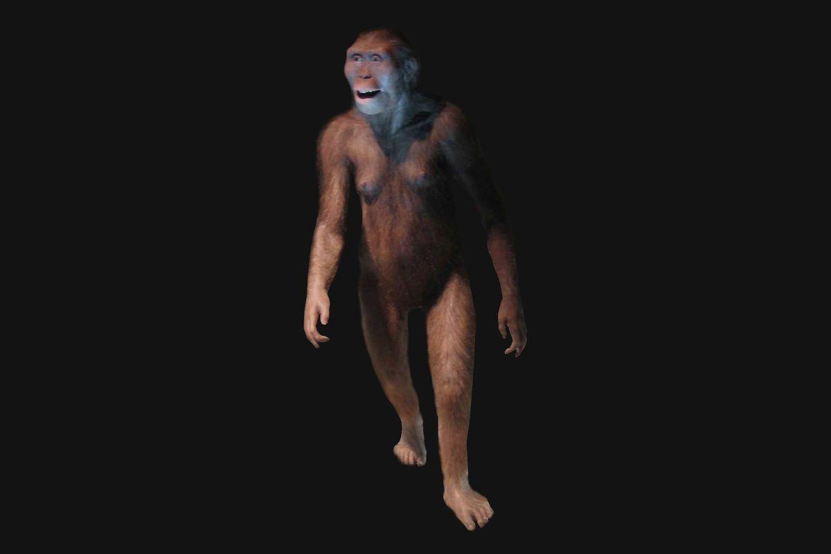primeros homínidos, Australopithecus.